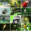Royalty-Free Stock Photo: Bird Collage