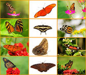 Butterfly Collage — Stock Photo