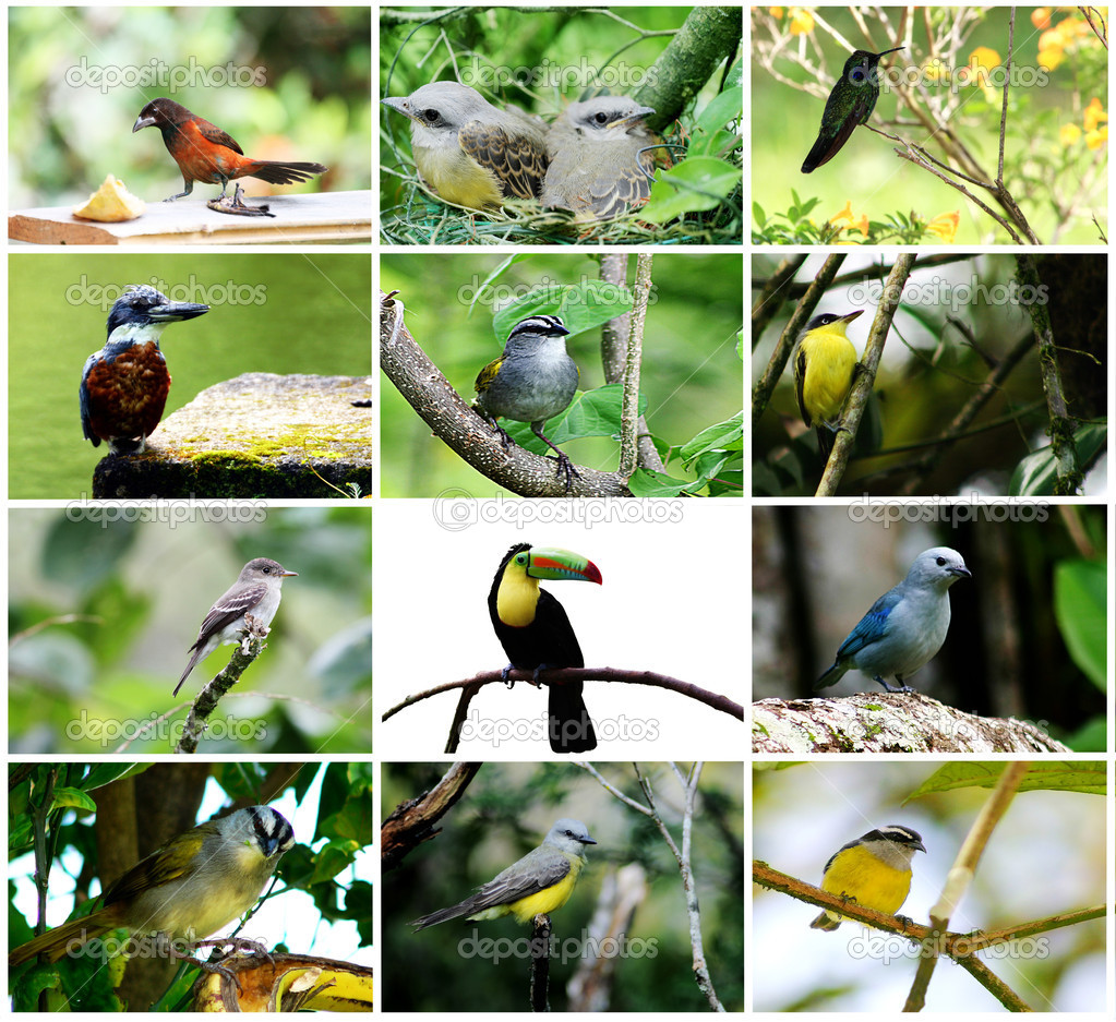 Bird collage stock photo 169 cratervalley 5213632 white feathers