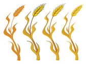 Collection wheat — Stock Vector