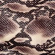 Snakeskin — Stock Photo #4373333