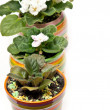 Potted flowers in a row — Stock Photo