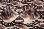 Snakeskin — Stock Photo