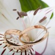 Wedding rings in flower. — Stock Photo