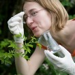 Stock Photo: New plant analyzing.
