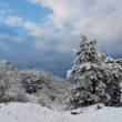 Winter tree. — Stockfoto #4597989