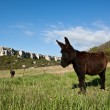 Burro in countryside. - Stock Photo