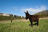 Burro in countryside. — Stock Photo