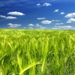 Stock Photo: Green field
