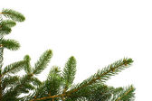 Fir Branches On White — Stock Photo