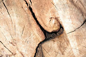 Wood Section — Stock Photo