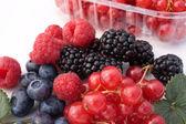 Frutti Di Bosco - Closeup — Stock Photo