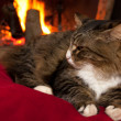 Cat Sitting Near Fireplace — Stock Photo