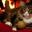 Christmas Cat — Stock Photo #4489915