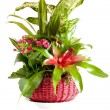 Green Plants Arrangement — Stock Photo #4637014