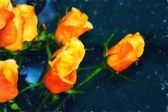 Orange Roses Fine Art — Stock Photo