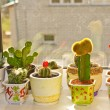 Cactus — Stock Photo #3964143
