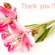 Thank you` — Stockfoto