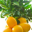 Lemon tree - Stock Photo