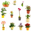 Collage of indoor plants — Stock Photo