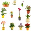 Stock Photo: Collage of indoor plants
