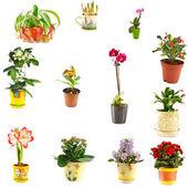 Collage of indoor plants — Stock Photo