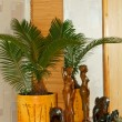 Stock Photo: Sago palm