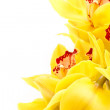 Yellow orchid — Stock Photo #4882249