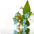 Blue flower — Stock Photo #4892603