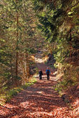 Pareja en el bosque — Foto de Stock