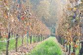 Autumn mood — Stock Photo