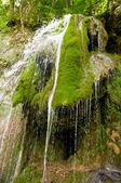 Wet moss — Stock Photo