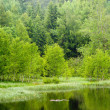 Stock Photo: Forest lake
