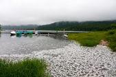 Foaming lake — Stock Photo