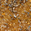 Fresh honey in comb and bees — Stock Photo