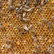 Royalty-Free Stock Photo: Fresh honey in comb and bees