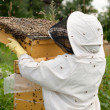 Bee keeper at work - Stock Photo