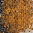 Stock Photo: Old beewax comb and bees