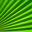 Palm leaf closeup green abstract background — Stock Photo