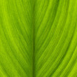 Green leaf closeup macro shot — Stock Photo
