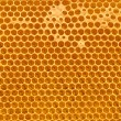 Stock Photo: Fresh honey in comb