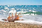 Seashell in surf and sand of seashore — Stock Photo