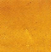 Fresh honey in comb — Stock Photo