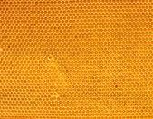 新鮮な蜂蜜の櫛で — ストック写真