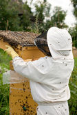 Bee keeper at work — Stock Photo