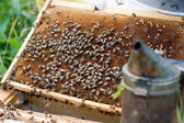 Old comb in opened hive and bees — Stock Photo