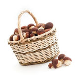 Basket full of cepe mushrooms and small pile on white background — Stock Photo