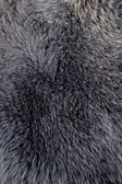 Fur gray texture — Stock Photo