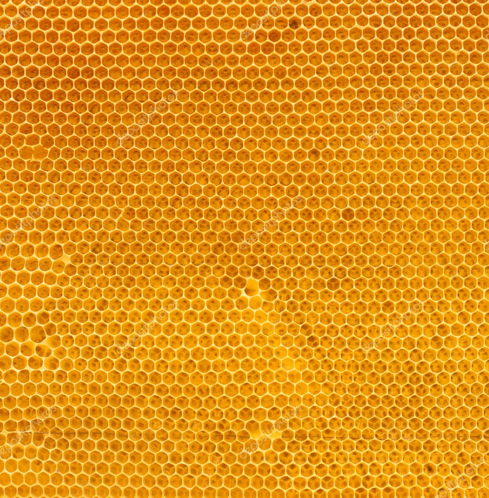 Fresh honey in comb  Stock Photo #5313539