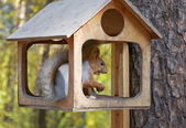 Niedliche kleine Eichhörnchen Nüsse essen — Stockfoto